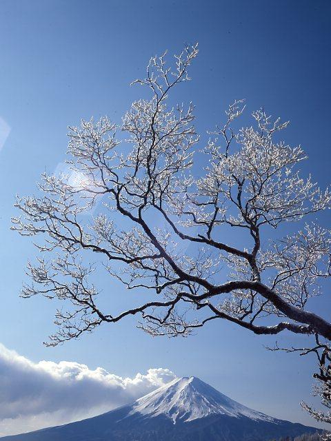 三つ峠より 富士山