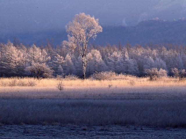小田代ヶ原の朝 冬景 栃木県